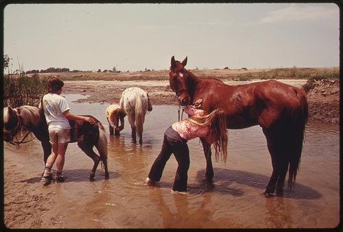Mycie koni