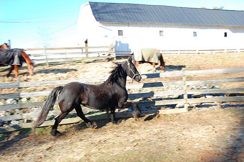 Koń na lonży